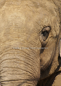 Close-up view of an elephant's face