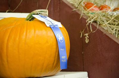 Blue ribbon pumpkin