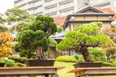 Bonsai at Happo-en