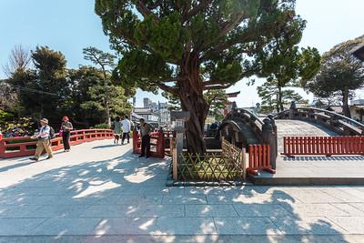 Kamakura: Hachimangu