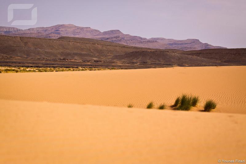 Dunes vers Dfila, environ de Figuig