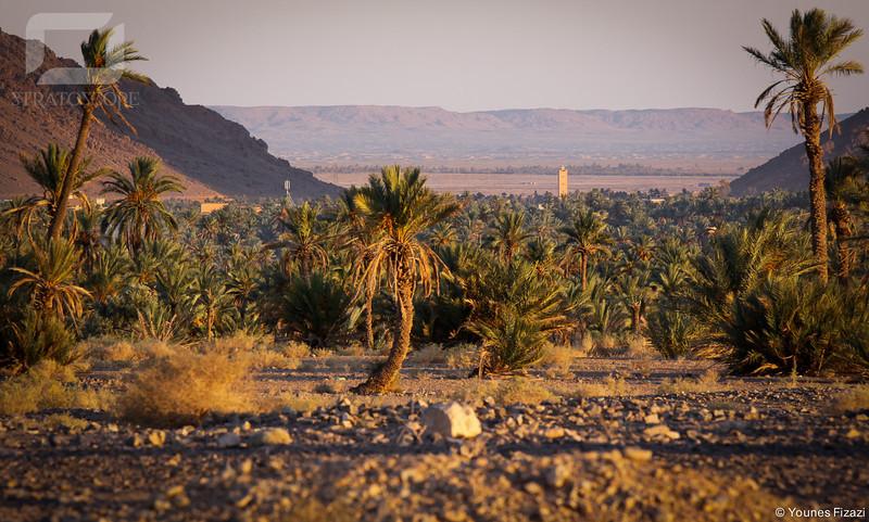 Vallée de l'Oued Zousfana.<br /> <br /> Le palmier au premier plan est au Maroc, nous sommes à moins d'un km de Figuig, derrière le minaret c'est l'Algérie...