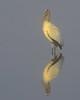 Wood Stork<br /> Ding Darling National Wildlife Refuge<br /> Sanibel Island, Florida