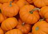092711<br /> Baby Pumpkins