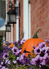 101111<br /> Window Boxes<br /> <br /> I saw these window boxes in the Pennsylvania town of Lititz on my weekend drive with their pumpkins surrounded by purple flowers..