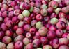 092011<br /> Apple Bin at Hollabaugh Brothers Fruit Farm & Market
