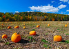 101810<br /> Pennsylvania Pumpkin Field