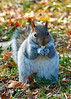 112210<br /> Lunchtime at Squirrel Park<br /> <br /> Mariner Point Park my have the best fed squirrels anywhere. Most people either walk feeding the squirrels or walk their dogs who want to chase the squirrels.