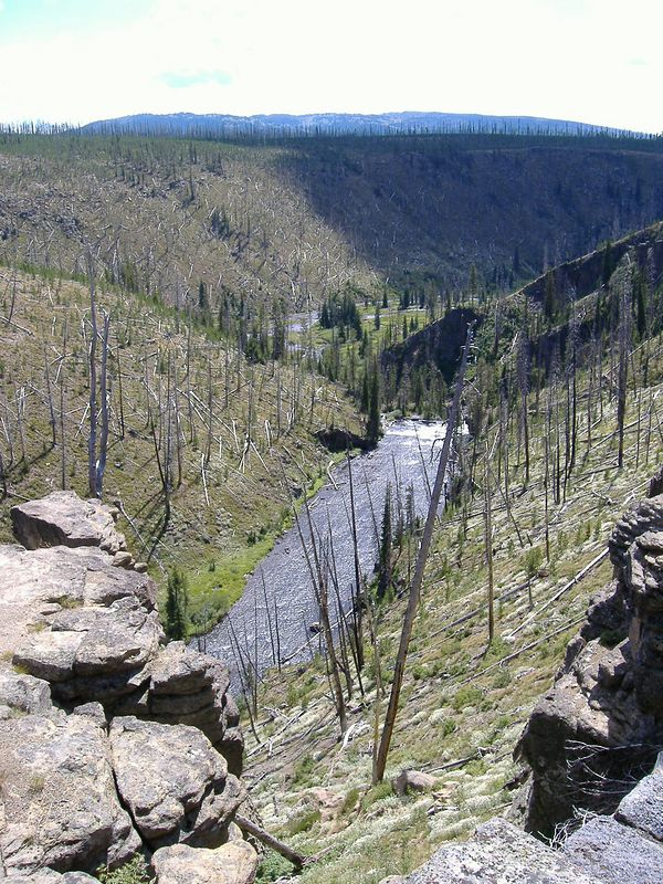 Gibbon River and results of 1988 fire.