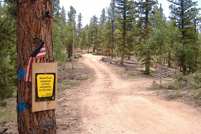 No firewood cutting allowed. Commerical logging operations only, plz.