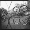 Pinhole on film, the pond in my garden exposure around 15 secs