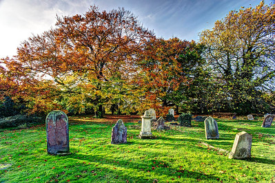 Beech Trees in St Wendreda's Cemetery