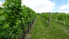 Cottonworth Vineyard 3 & 10yr Vines 14-08-2016 11-44-01