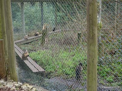 Capuchin Monkeys Monkey World 28-02-2016 10-29-40