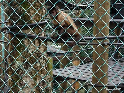 Monkeys Monkey World 28-02-2016 10-35-49
