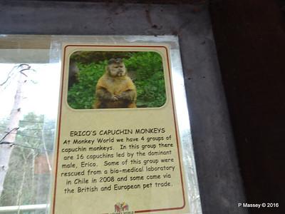 Erico's Capuchin Monkeys Monkey World 28-02-2016 10-34-15