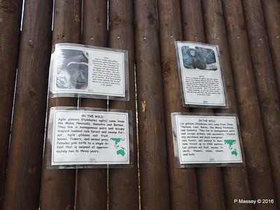 Paul Agile Gibbon Monkey World 28-02-2016 10-49-26