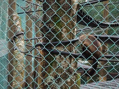 Monkeys Monkey World 28-02-2016 10-35-47