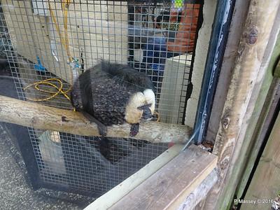 Jehtro White-Faced Saki Monkey Monkey World 28-02-2016 10-38-41