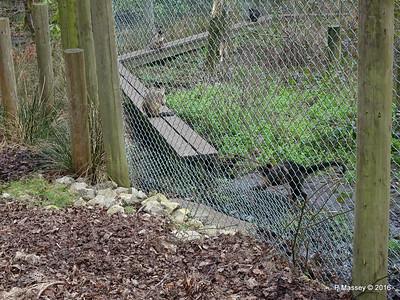 Capuchin Monkeys Monkey World 28-02-2016 10-29-33