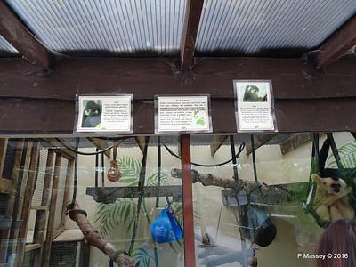 Tiem & Kim Info Golden-Cheeked Gibbons Monkey World 28-02-2016 10-31-15