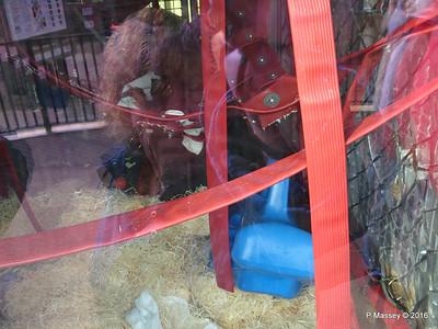 Nursery Monkey World 28-02-2016 10-45-56