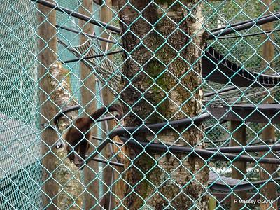 Monkeys Monkey World 28-02-2016 10-35-55