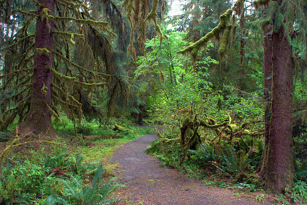 Washington State: Rain Forest