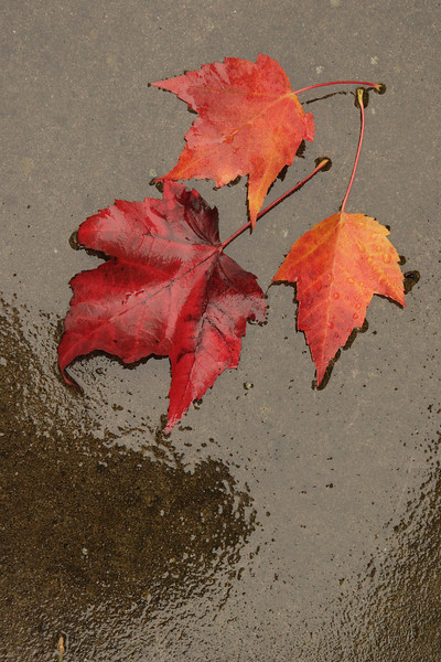 Fall leaves on wet concrete