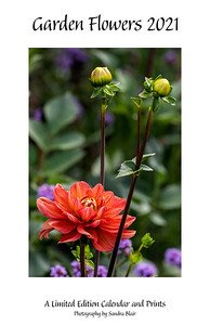 Garden Flowers 2021 Limited Edition Calendar and Prints