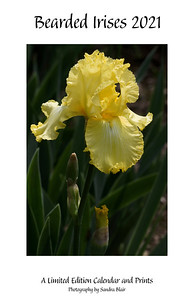 Bearded Irises 2021 Limited Edition Calendar and Prints