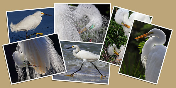 Egret Note Cards - Set B