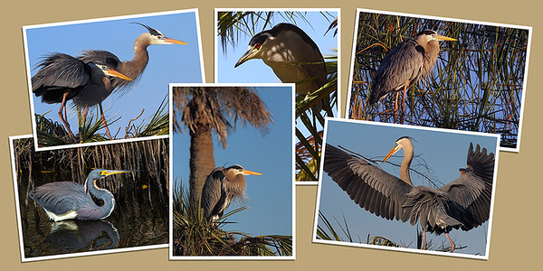 Heron Note Cards - Set B