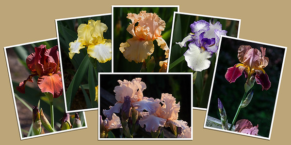 Iris Note Cards - Set B