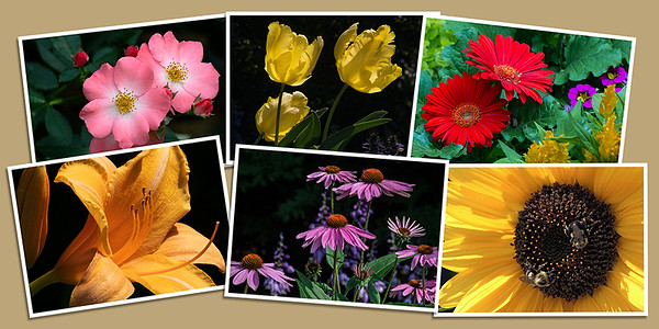 Garden Flower Note Cards - Set A