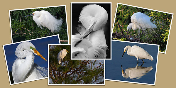 Egret Note Cards - Set A