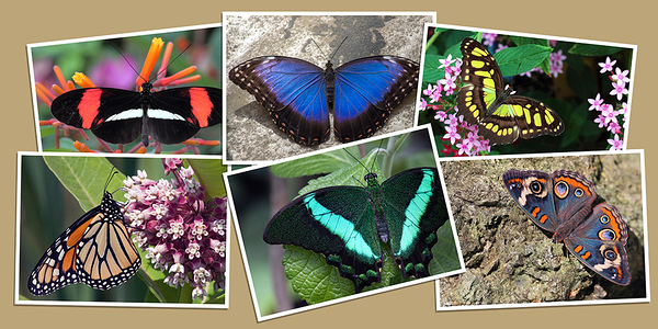 Butterfly Note Cards - Set A