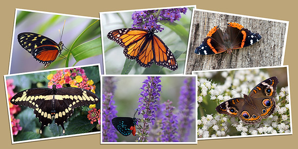 Butterfly Note Cards - Set B