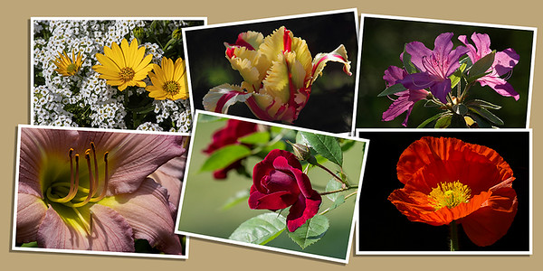 Garden Flower Note Cards - Set B