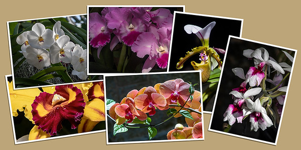 Orchid Note Cards - Set B