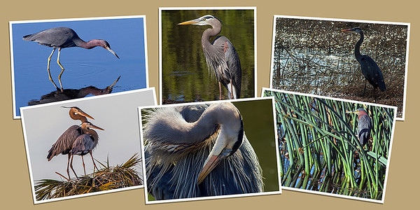 Heron Note Cards - Set A