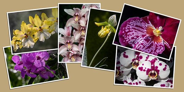 Orchid Note Cards - Set A