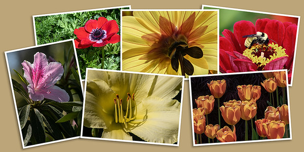 Garden Flowers Note Cards - Set C