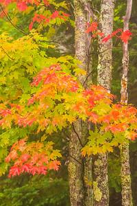 10860-Fall Colors-Park Hill Road