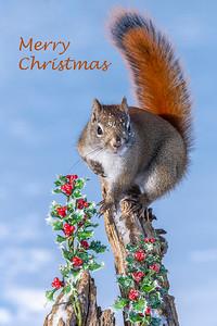 10835 - Merry Christmas