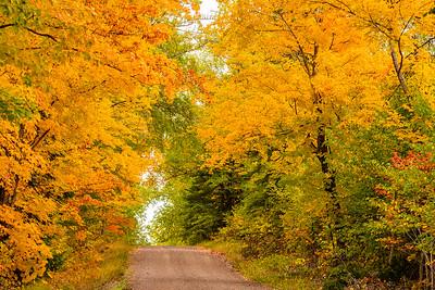 10861-Fall Colors-Honeymoon Trail