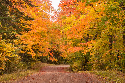 10832 - Fall Colors - Honeymoon Trail
