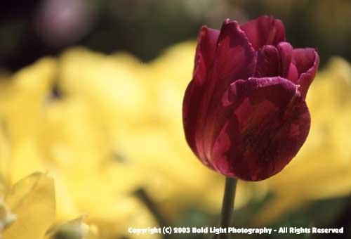 Purpleflower01