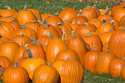 10198-Pumpkins-Itasca County, MN