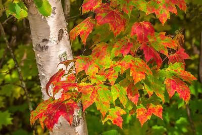10831 - Fall Colors